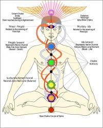 Нади в йоге (энергетические каналы)
