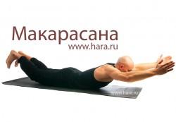Макарасана в йоге